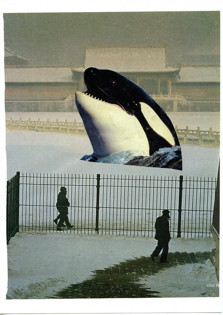 killer-whale-dec25.jpg